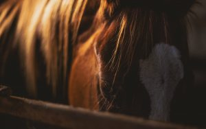 paardencoaching Amsterdam